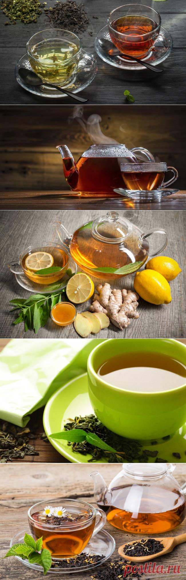 Зеленый чай против черного чая. Какой полезнее?