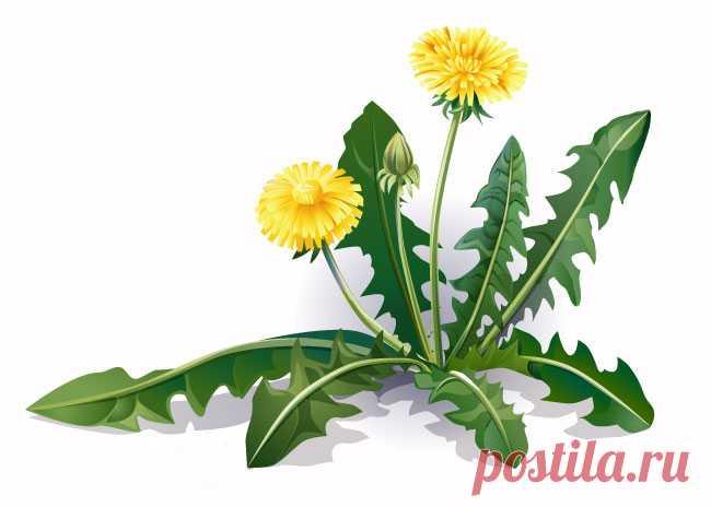 Всего один листик этой травы, которая есть в любом саду, может спасти Вашу жизнь за минуту, но только некоторые люди знают, как использовать его! Удивительная польза растений