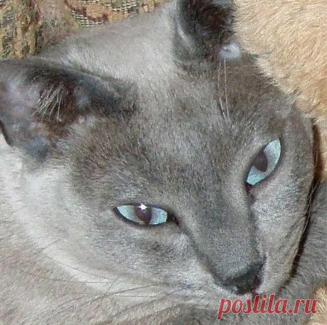(76) GATOS - AJUDA, AUXÍLIO E ORIENTAÇÃO (Felinos)