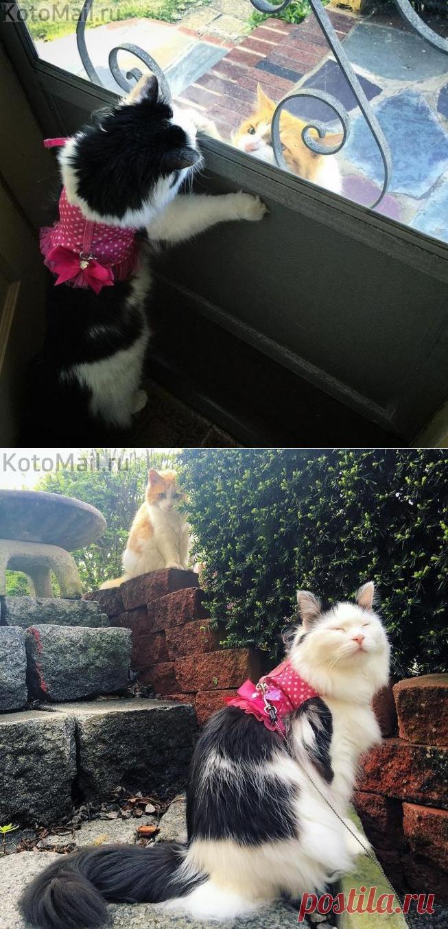 Влюбленный соседский кот | KotoMail.ru