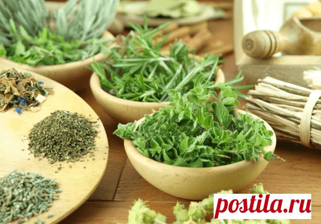 Какие травы мочегонные? Список из 11 трав, польза и вред, рецепты Какие травы мочегонные. Приводим список растений с наибольшим мочегонным эффектом. Разбираем их пользу и вред. Приводим рецепты.