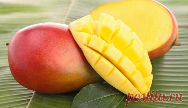 Манго – сладкий тропический фрукт, завоевывающий любовь почти каждого, кому довелось попробовать экзотику. Неожиданный вкус манго сочетает в себе ананасовые, клубничные, персиковые и морковные нотки. Уверена, что большинство хозяек, очищая манго у себя дома, неоднократно задумывались о том, чтобы посадить косточку манго и вырастить фрукт на подоконнике. Огорчу вас новостью: плодоношение манго дома практически невозможно. Но даже без плодов растение максимально декоративно....