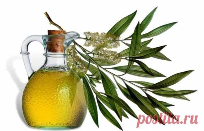 El aceite del árbol de té para los cabellos