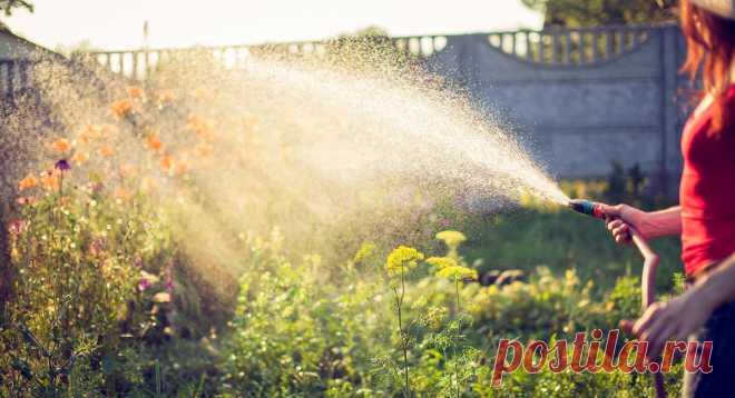 Как помочь растениям в жару — Ботаничка.ru