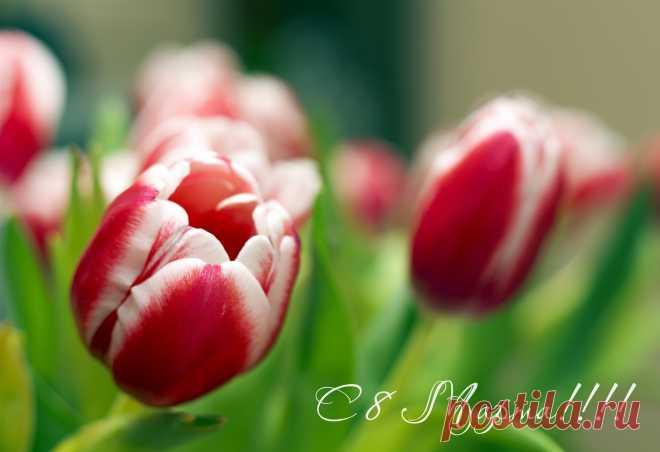 Дорогие дамы - прекрасные, вдохновляющие и неповторимые! Поздравляем вас с 8 марта! Пусть ваша жизнь будет наполнена солнечным светом, а дом - теплом, благополучием и гармонией. Пусть в мире всегда остаётся место для чудес, пусть сбывается невозможное. Любви и радости в каждый момент, дорогие женщины! Ваша Постила.