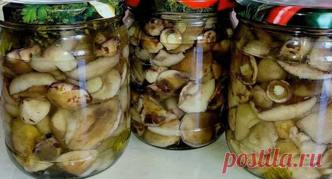 Маринованные маслята на зиму – 10 рецептов приготовления с пошаговыми фото Маринованные маслята на зиму – 10 рецептов приготовления с пошаговыми фото. Заходите на kylinariya.ru - будет вкусно! Новые рецепты каждый день!