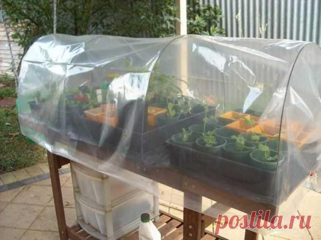 El invernadero por las manos: para los pepinos, el tomate, el pimiento, las plantas, en la huerta, al balcón
