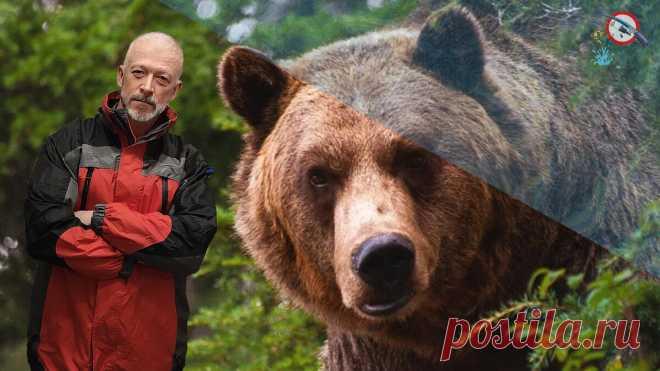 Как отпугнуть медведя голыми руками. Методы таёжных лесников