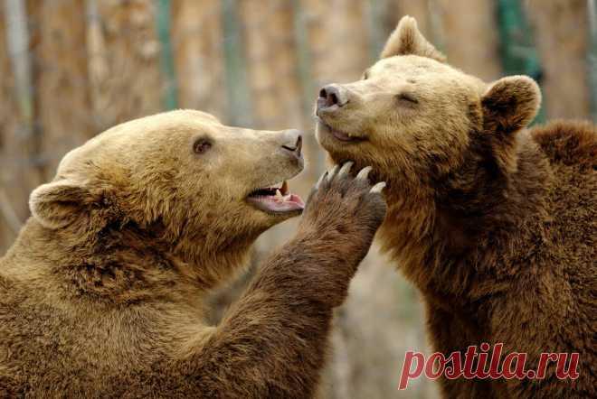 Животные тоже любят: милейшая фотоподборка для поднятия настроения   PhotoWebExpo   Яндекс Дзен