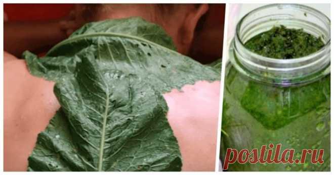 Листья хрена вытягивают боль из спины — проверенный и безотказный рецепт - Хитрости Жизни - медиаплатформа МирТесен