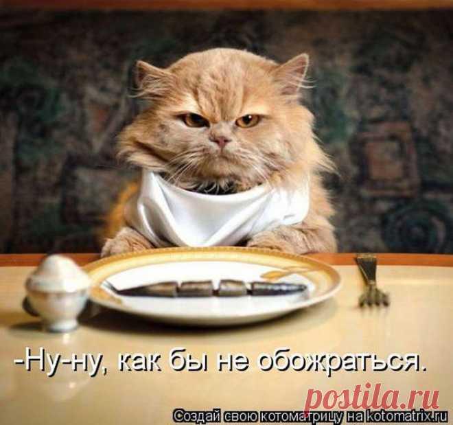 Лучшие котоматрицы недели.