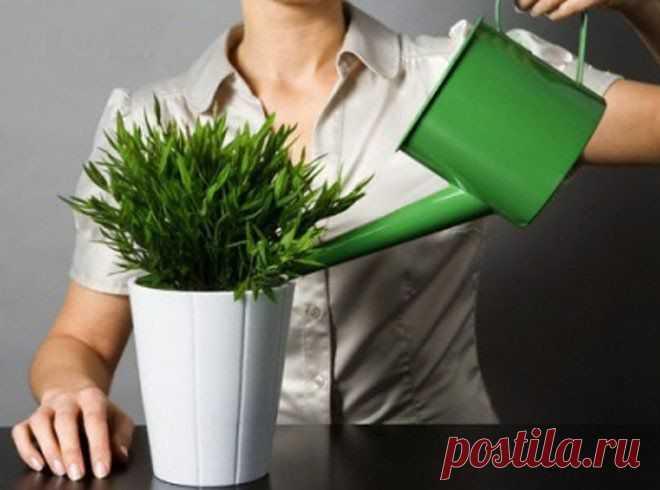 Чем подкармливать комнатные растения? Ч… - — я.ру