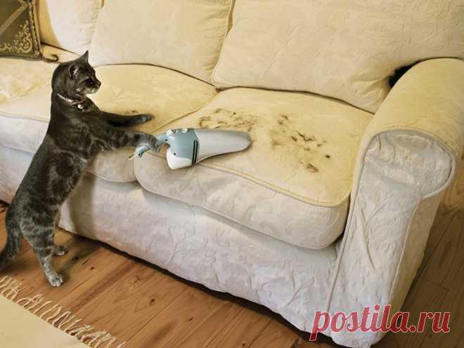 Отличные способы проверенного избавления от кошачьих меток