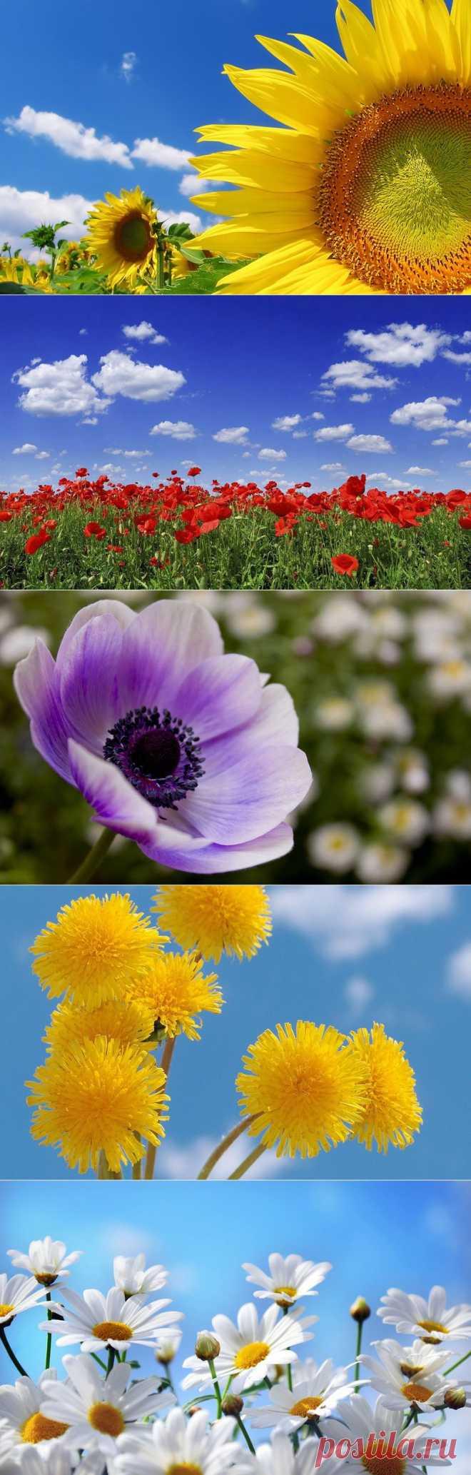 Обои на рабочий стол - *Цветы, природа*.