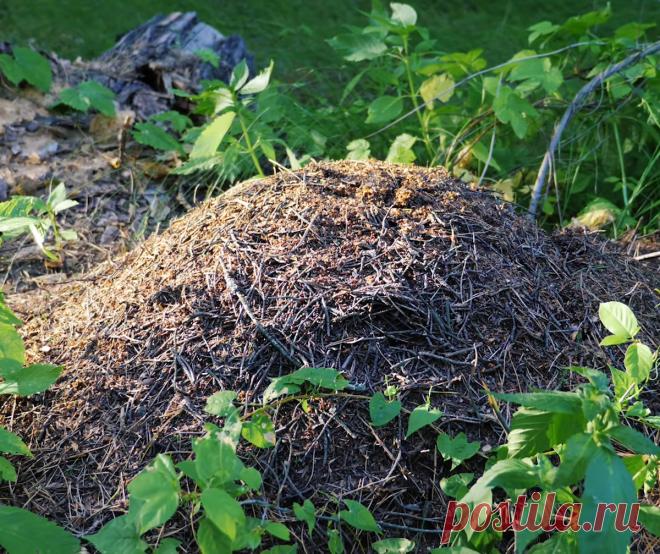 Друг из тайги поделился рабочими способами защиты от клещей, комаров и других насекомых   Рыбалка для души   Яндекс Дзен