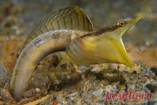 Победители конкурса подводной фотографии 2011/2012 | ФОТО НОВОСТИ