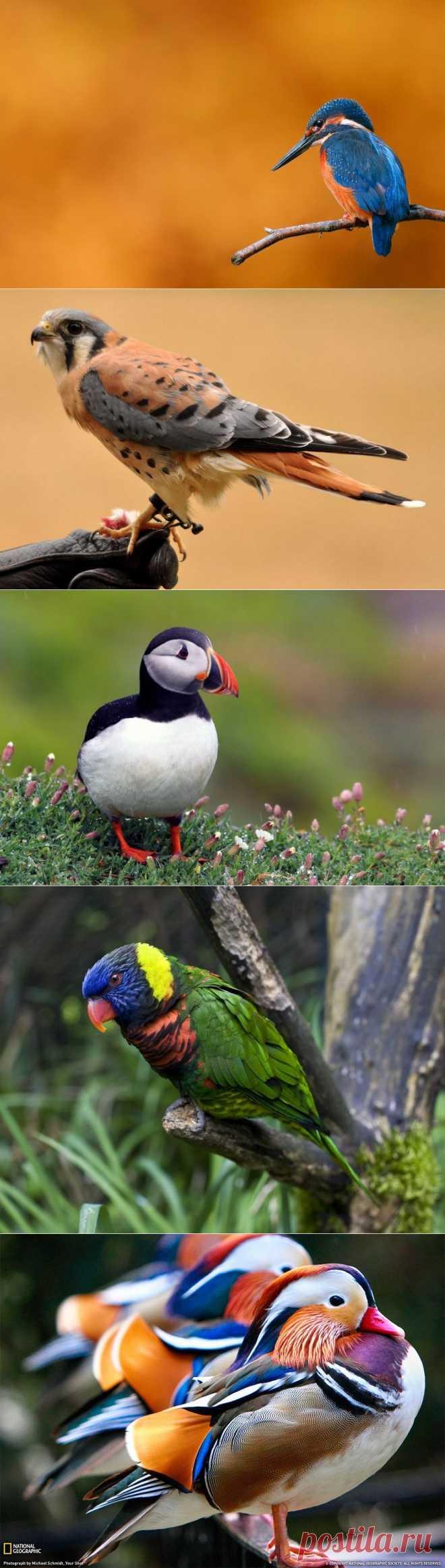 10 самых красивых птиц - Интересные фото
