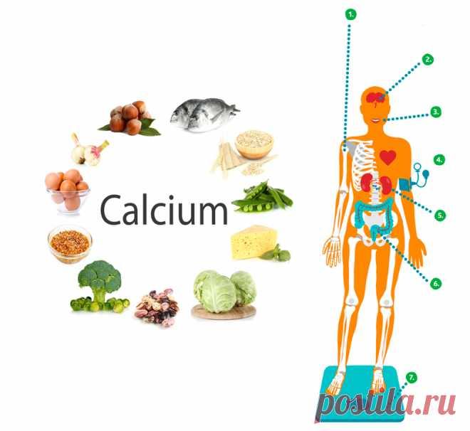 Как принимать кальций, не навредив организму Кальций – это микроэлемент, участвующий в построении клеток человеческого организма. Он обеспечивает прочность костей, зубов, ногтей, способствует нормальной работе сердца и других жизненно важных органов, снижает давление и положительно воздействует на процесс свертываемости крови.