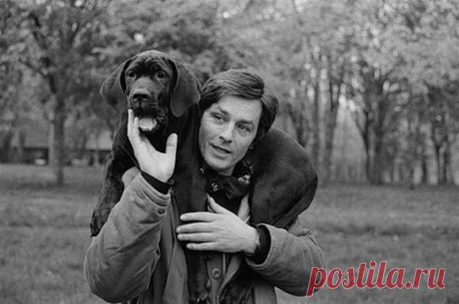 Поразительные факты, которые вы не знали об Ален Делоне  В молодости Ален Делон носил военные куртки, чтобы было удобнее согревать всех щенков, которых он встречал на пути. Сегодня французский актер, которому скоро 80 лет, содержит 5 питомников для бездомн…