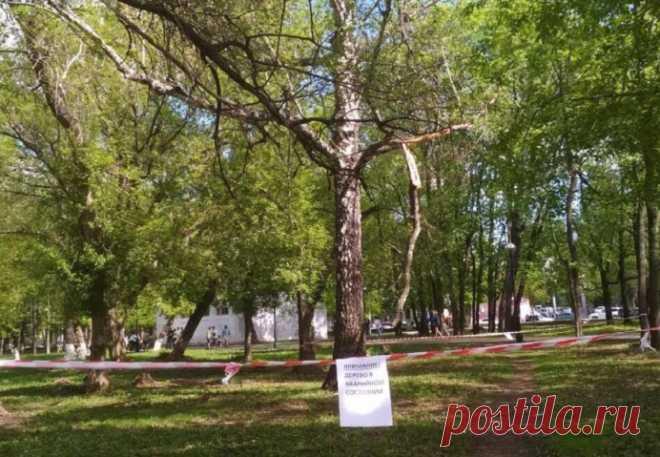 В Самаре решают судьбу древнего дуба, расположенного в парке Гагарина, май 2019 г | 63.ru Самара