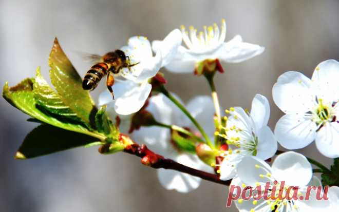 Народные приметы на 28 апреля – Пудов день, Святой Пуд По приметам, 28 апреля рябина и калина почки распускают, а пчеловоды из омшаника выносят пчел. В народном календаре дата получила название Пудов день, Пуд, Святой Пуд.