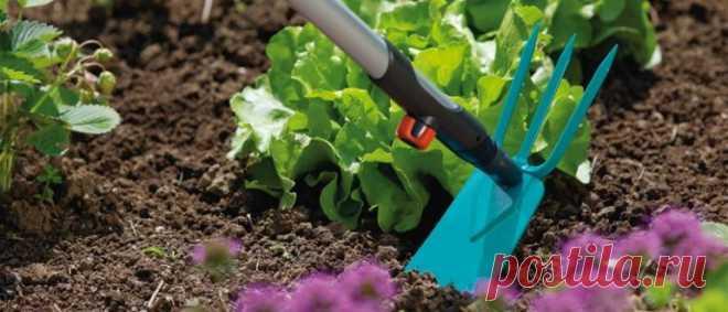 Чем подкормить голубику садовую весной от А до Я Сроки подкормки голубики садовой, признаки нехватки полезных веществ. Правила весенней подкормки голубики: органические, минеральные подкормки, народные средства. Удобрение в зависимости от вида почвы.