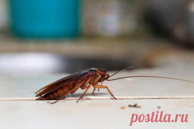В вашем доме могут жить отвратительные насекомые. Вот как от них избавиться