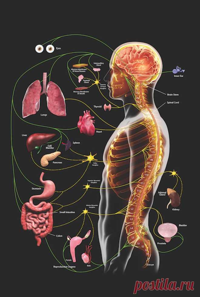 УПРАЖНЕНИЯ «28 ВИБРАЦИЙ»: СТАНЬТЕ ЗДОРОВЕЕ И МОЛОЖЕ!  Физическая вибрация – это мощнейший оздоровительный и омолаживащюий способ работы с телом. Физическая вибрация оживляет тело, поднимает его тонус, дает возможность организму ожить, стать здоровее и м…