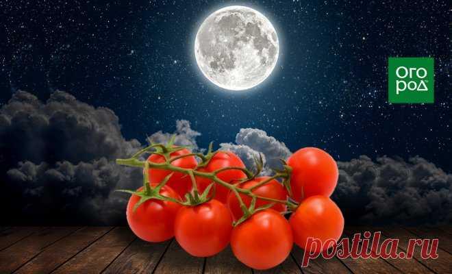Выращивание томатов по Лунному календарю в 2021 году   На грядке (Огород.ru)