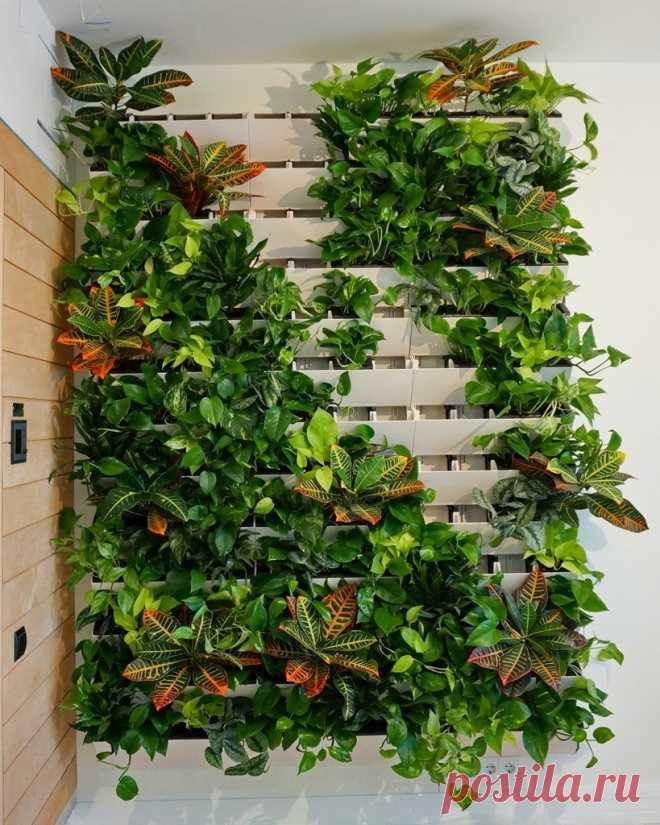 Как сделать в квартире вертикальное озеленение и что это такое | Рекомендательная система Пульс Mail.ru
