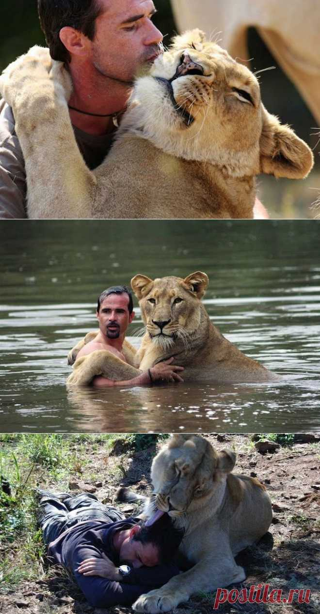 Уникальная дружба человека и льва (13 фото) - Fishki.Net   Фишкина картинка