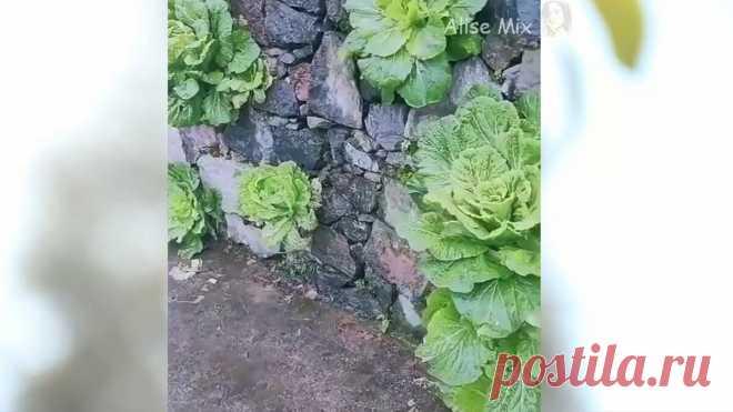 Ловкие плантаторы: огороды бывают разные:), в том числе настенные ;)