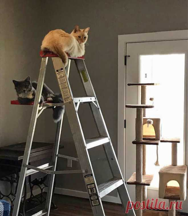 19 забавных примеров кошачьей логики, которая заставляет их спать где угодно, только не в своих кроватях