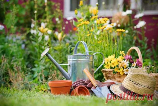 Лучшие соседи для растений, способные увеличить их урожайность Добрый день, мой читатель. Смешанные посадки — агротехника, которая применяется очень давно. Высокие растения с крупными листьями замедляют рост сорняков и могут спрятать в своей тени от палящего солнца тенелюбивые культуры. Растения, являющиеся сидератами, способны выступить в роли естественной подкормки, для своих соседей.... Читай дальше на сайте. Жми подробнее ➡