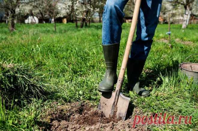 5 причин не перекапывать землю, или Чем полезна безотвальная обработка почвы Каждый год вы старательно перекапываете почву на участке? Уверены, что это повышает плодородие, но никак не можете вырастить действительно впечатляющий урожай? Возможно, самое время перейти на безотва...