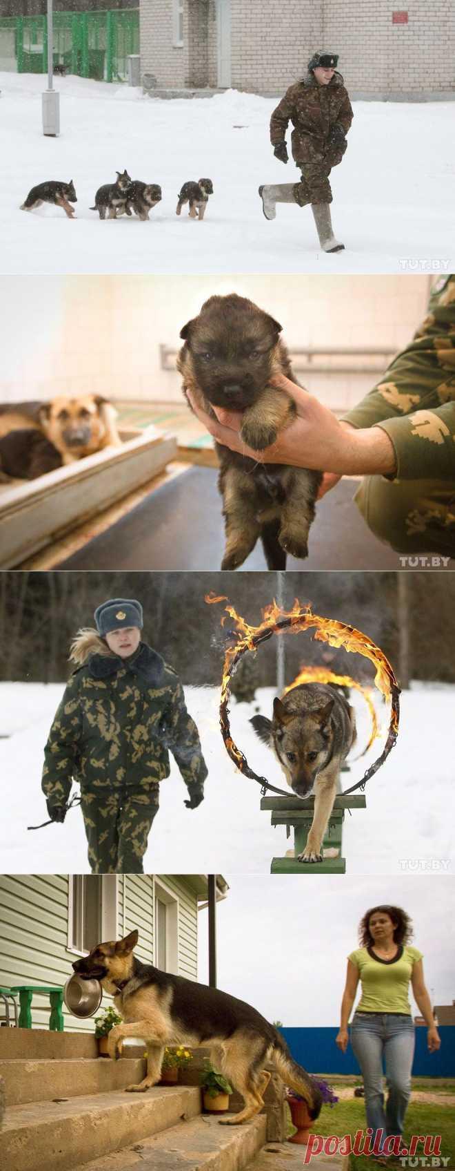 Как щенки становятся защитниками границы : НОВОСТИ В ФОТОГРАФИЯХ