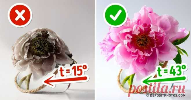 10 ways to keep flowers in a vase fresh for a long time my bouquet according to this instruction cost 2 weeks.