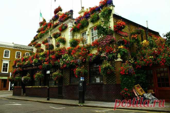 Спешите видеть!: цветущий паб Находится на Kensington Church Street. Фасад этого паба, благоухающий цветами, особенно красив в летний сезон. Внутри паб не многим отличается от любого другого в Лондоне, но тоже чем-то похож на оранжерею. Сюда приходят ужинать по-тайски в приятной шумной атмосфере масса народу.