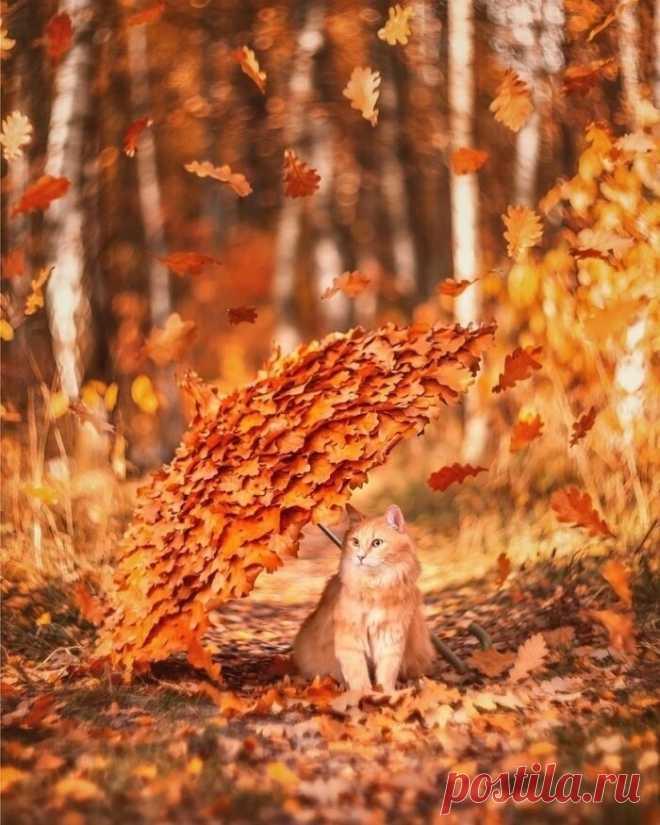 10 октября - День шуршания листьями.