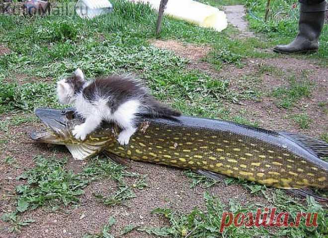 Рыба моей мечты!