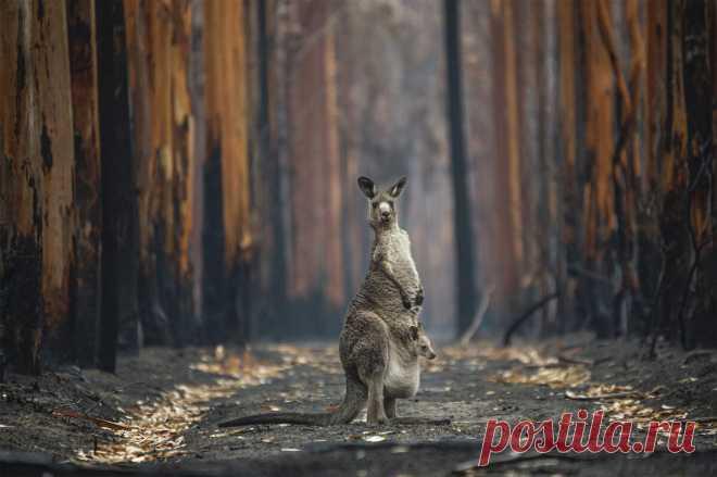 Необычайные события из мира природы в итогах фотоконкурса BigPicture Natural World Photography 2021   PhotoWebExpo   Яндекс Дзен
