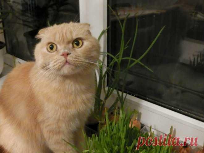 Выращиваю кошачью траву без грунта — всходит быстрее, чем в земле, а места занимает меньше | Собираем урожай | Яндекс Дзен