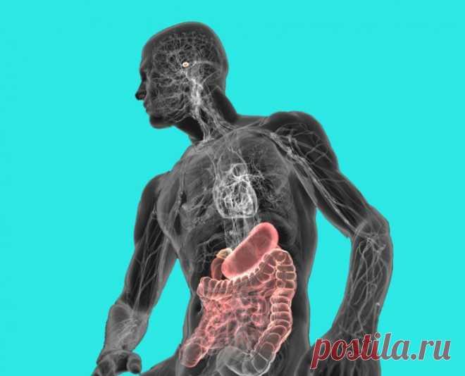 Как вылечить кишечник естественным путем / Будьте здоровы