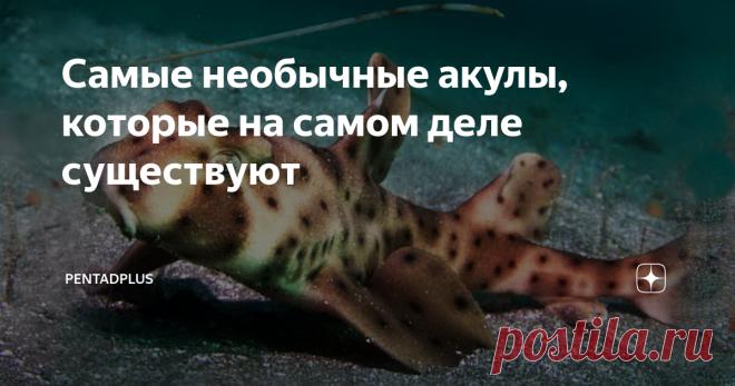 Самые необычные акулы, которые на самом деле существуют Неожиданные лапы, большой рот, необычный набор зубов, маскировка под коврик — встречайте самых странных из акул водного мира.