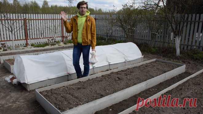Посадка лука рассадным способом и севком: как получить крупные луковицы? Видео — Ботаничка.ru
