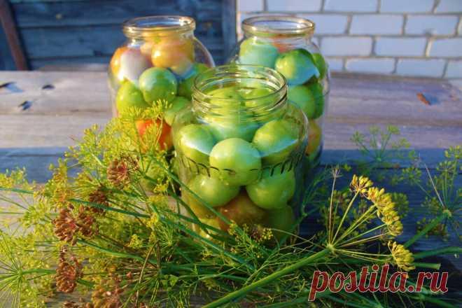 Настал черед посолить зеленые помидоры, это еще тот деликатес, рассказываю, как я их готовлю | Деревушка долголетия | Яндекс Дзен