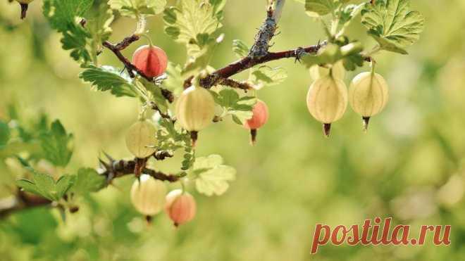 Диетолог назвала самые полезные летние ягоды Диетолог Юлия Кохолкова перечислила самые полезные сезонные ягоды. По словам специалиста, в этот перечень входят голубика, черешня, крыжовник, клубника и малина.