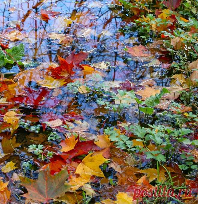 kayelena — «Разноцветие.» на Яндекс.Фотках