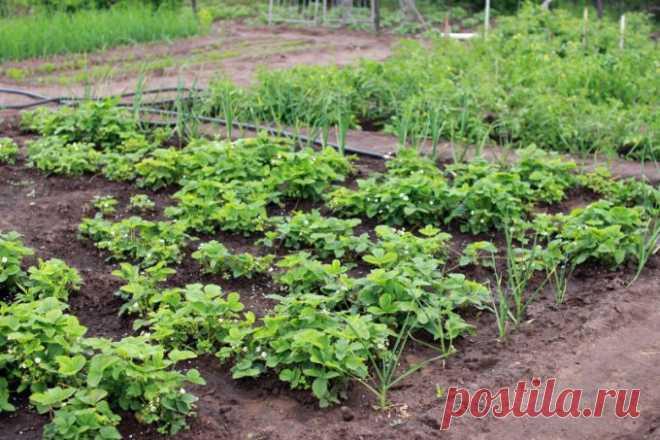 Можно ли применять нашатырный спирт в качестве удобрения? 🚩 Сад и огородд
