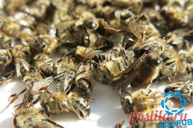 Пчелиный подмор в крем-воске «ЗДОРОВ» Пчелиный подмор - Содержит 27 активных микроэлементов. Гепарины и гепароиды подавляют воспалительный процесс, стабилизируют артериальное давление, характеризуются рядом терапевтических воздействий на кровеносную систему. Пчелиный подмор в составе крема-воска «ЗДОРОВ» усиливает иммунитет, способствует мобилизации сил на…